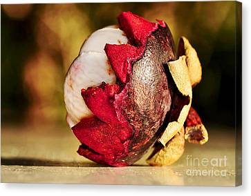 Tropical Mangosteen - Ready To Eat Canvas Print by Kaye Menner