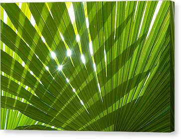 Tropical Palm Leaf Canvas Print by Amanda Elwell