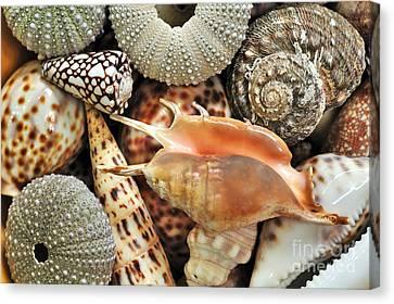 Tropical Shells Canvas Print by Kaye Menner