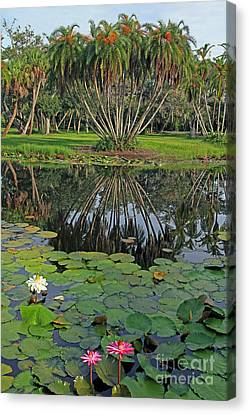 Canvas Print featuring the photograph Tropical Splendor by Larry Nieland