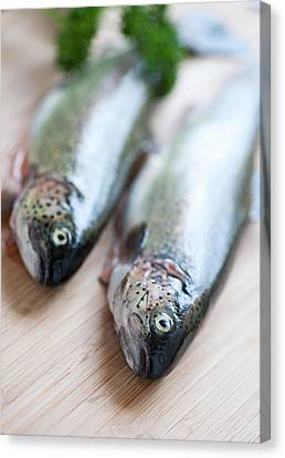 Trouts Canvas Print by Carlo A