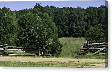 Trumpet Vine And Fence At Appomattox Courthouse Virginia Canvas Print by Teresa Mucha