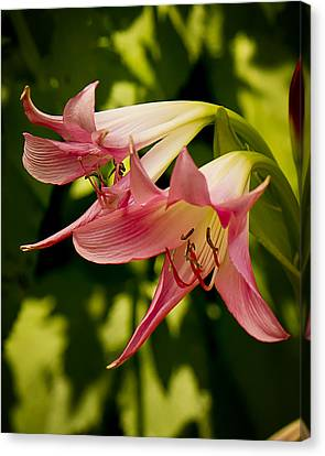 Trumpets Canvas Print by Michael Putnam