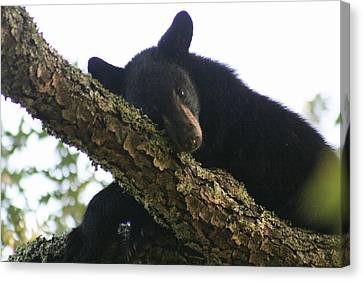 Trying To Take A Nap Canvas Print by Christopher Ewing