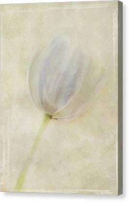 Tulip 1 Canvas Print by Marion Galt