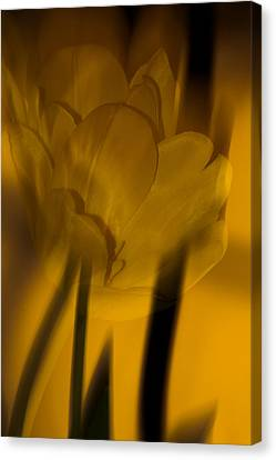 Canvas Print featuring the photograph Tulip Abstract by Ed Gleichman