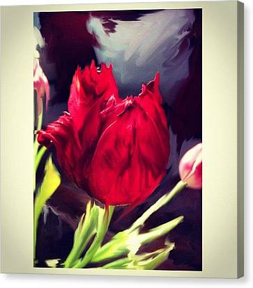 Impressionism Canvas Print - Tulip Aflame by Paul Cutright