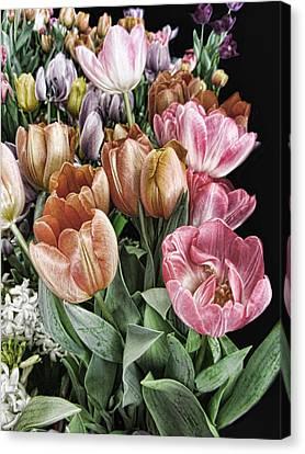 Tulip Ala Magnificent Canvas Print by Kathy Clark