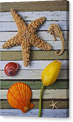 Tulip And Starfish Canvas Print by Garry Gay