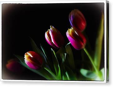 Tulip Dream Canvas Print