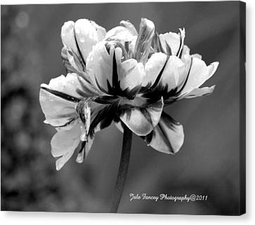 Tulip In Black And White Canvas Print