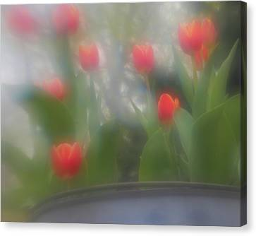 Canvas Print featuring the photograph Tulip Mist by Coby Cooper