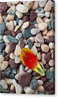 Tulip Petal And Wet Stones Canvas Print by Garry Gay