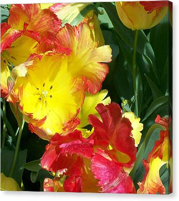 Tulips 1 Canvas Print