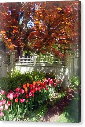 Tulips By Dappled Fence Canvas Print by Susan Savad