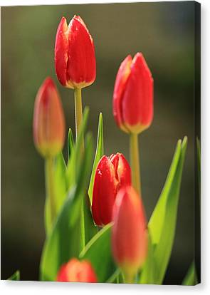 Canvas Print featuring the photograph Tulips by Coby Cooper