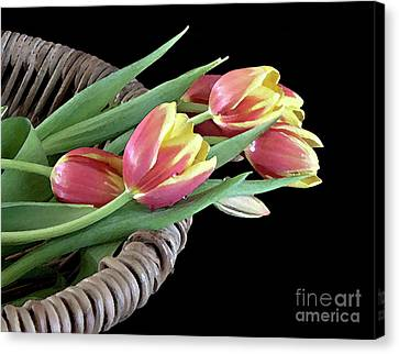 Tulips From The Garden Canvas Print by Sherry Hallemeier