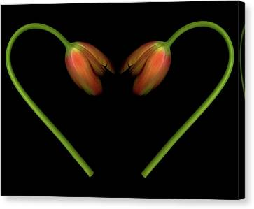 Tulips In Shape Of Heart Canvas Print by Marlene Ford