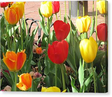 Canvas Print featuring the photograph Tulips In The Sunshine by Shawn Hughes