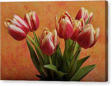 Tulips Canvas Print by James Bethanis