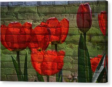 Tulips On Bricks Canvas Print by Eric Liller