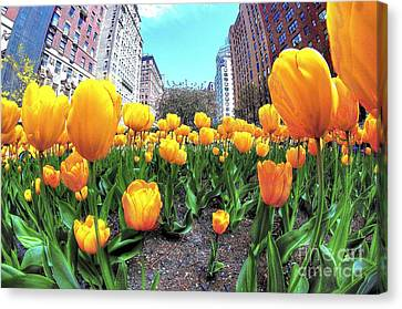 Tulips On Park Avenue Canvas Print by Jeff Landau