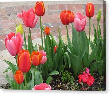 Canvas Print featuring the photograph Tulips by Shawn Hughes