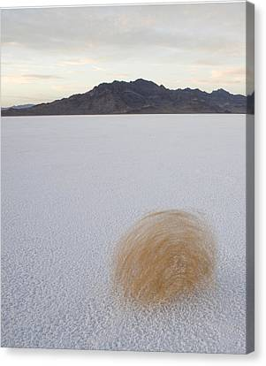 Tumbleweed Spinning Over The Bonneville Canvas Print by John Burcham