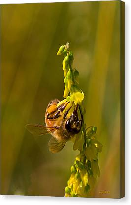 Tupelo Honey Canvas Print by Mitch Shindelbower