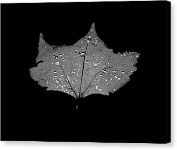Turn Over A New Leaf Canvas Print by Betsy Knapp