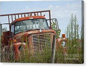 Old Country Roads Canvas Print - Turned Out To Pasture by Wilma  Birdwell