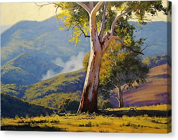 Turon Gum Tree Canvas Print by Graham Gercken