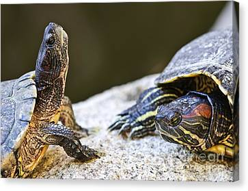 Turtle Conversation Canvas Print