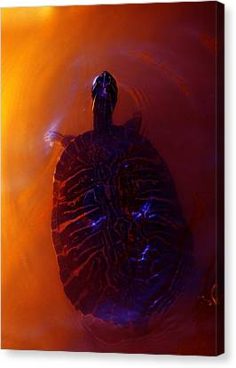 Turtle In Florida  Canvas Print