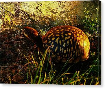 Turtle  Canvas Print by Maria Blumberg