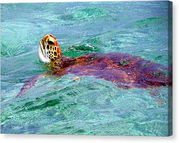 Turtle Time  Canvas Print by Karen Wiles