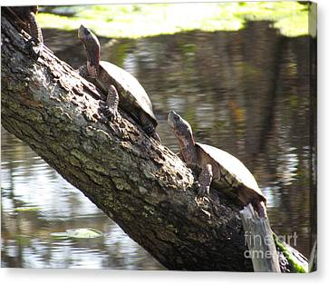 Turtles On The Move Canvas Print
