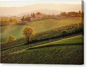 Tuscan Vinyards Canvas Print by John and Tina Reid