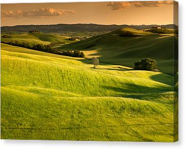 Tuscany Cornfield With Lone Tree At Sunset Canvas Print by Michele Berti