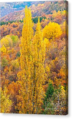 Canvas Print featuring the photograph Tuscany Landscape  by Luciano Mortula