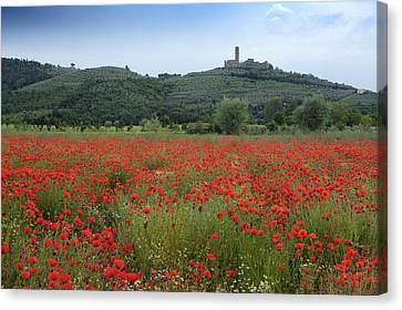 Tuscany Poppies 1 Canvas Print by Al Hurley