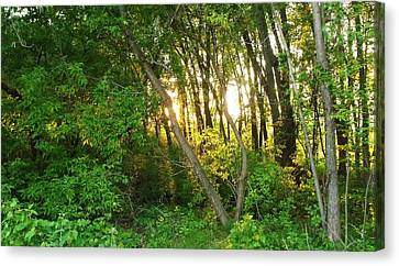 Canvas Print - Twilight In The Woods by Anna Villarreal Garbis