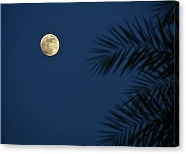Twilight Moon Canvas Print by Pandiyan V
