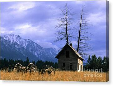 Twin Tree Cabin Canvas Print by Bob Christopher