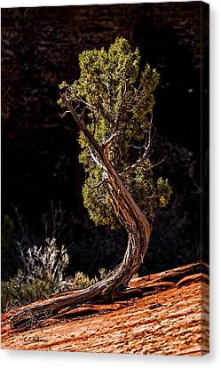 Twisted Reach Canvas Print by Christopher Holmes