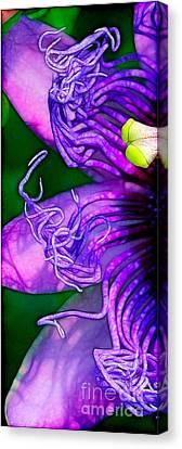Twisted Shadows Canvas Print by Judi Bagwell