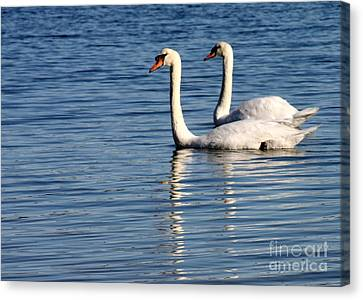 Two Beautiful Swans Canvas Print by Sabrina L Ryan