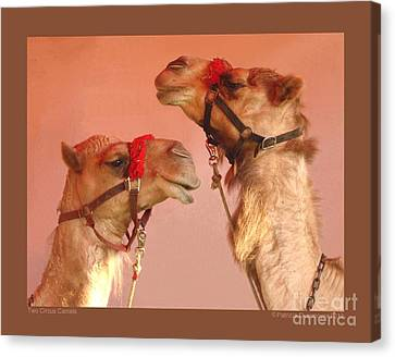 Two Circus Camels Canvas Print by Patricia Overmoyer