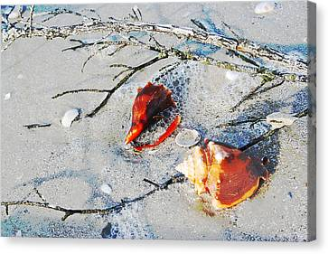 Two Conch Shells With Branch Canvas Print by Olivia Novak