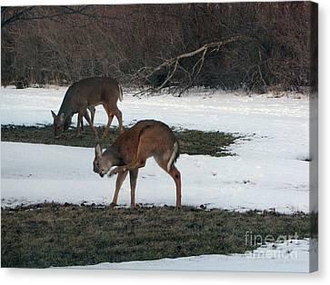 Two Deer Grazing Canvas Print by Cedric Hampton